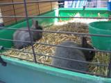 Lembeck Tiermarkt 2011